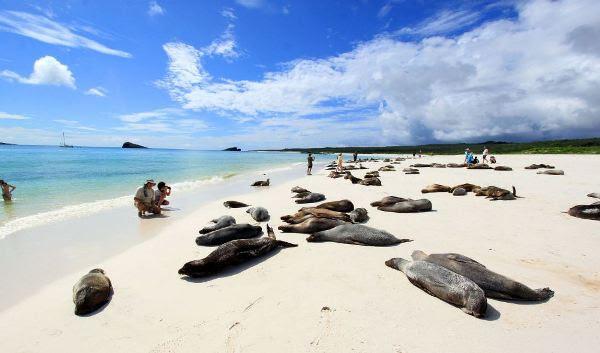 Tortuga Bay