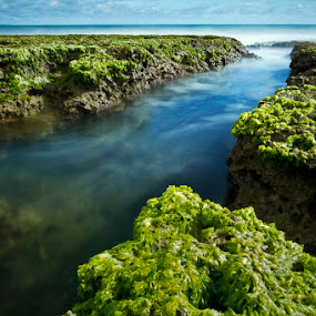 green by Franciscus Triana - Landscapes Waterscapes ( waterscape, lebak, sawarna, banten )