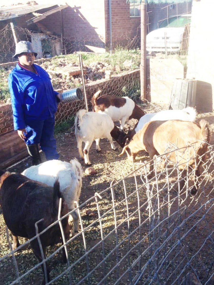 Landiswa Diniso owner of Livestock Enterprise in Burgersdorp in Eastern Cape.
