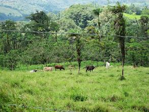 Photo: Cows!