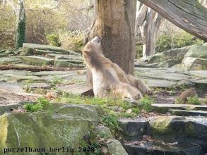 Photo: Knut untersucht nun den Baum ;-)