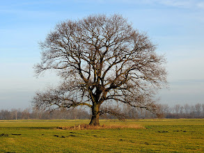 Photo: alone  #TreeTuesday ( +Tree Tuesday ) Curated by +Christina Lawrie , +Shannon S. Myers , +Allan Cabrera , +Ralph Mendoza and +Kim Troutman