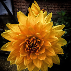 Sol by Claudio de Freitas Photography - Flowers Single Flower ( iphone photoshop photography flower,  )
