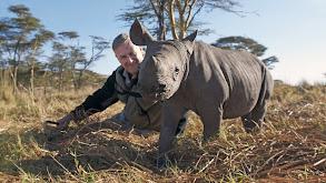 The Rhino Who Joined The Family thumbnail