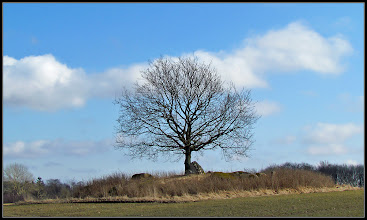 Photo: 20. marts 2011 - Træet
