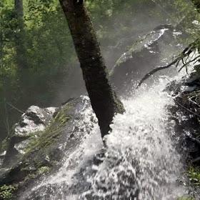Бурный лесной водопад