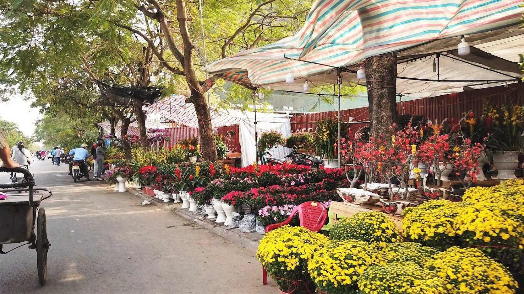 Chợ hoa Tết 2020 đường Lê Hồng Phong ở Hải Phòng 8