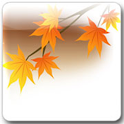 Maple Leaf Live Wallpaper Pro icon