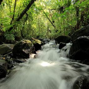 Water Flow by Rudy Kurniawan - Nature Up Close Water
