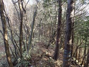 植林から二次林に(笹が多くなる)
