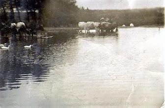 """Photo: Billede af branddammen i Vrå.  (1948-49) Bernt skriver om dammen. Billedet er taget fra syd, og de to hvid felter er stenene, der står ved indkørsel til Poulsminde. Ænderne er Søndalsgaards ænder, som Marinus fra Fællesskov solgte på Torvet i Viborg til jul.          Stenen blev senere flyttet 8-10 meter mod syd for at rette vejen ud. Lastbilerne sad ofte fast i sneen, når de skulle så meget ned i fart i svinget. Da, der dengang ofte faldt sne om vinteren, blev dammen ved tøbrud fyldt helt op og løb over.  Vejen til Fællesskov blev flyttet 8 meter mod syd, da Egon Hansen ofte sad fast i de store snedriver, når han kørte på slagteriet om morgenen. I 1958 syntes brandinspektøren fra Viborg, at dammen skulle renses op, så der var vand i tilfælde af brand. Man fjernede slam m.m. og gik så dybt, at dammen blev utæt i bunden og siden varder kun halvt så meget vand. Bernt var forbi her i oktober og syntes, at dammen var i en lidt trist forfatning.  Aksel har kontakt til kommunen og der skulle ske en ændring, så regnvandet fra """"gaden"""" skulle blive ledt i dammen, så måske kommer der ænder igen."""