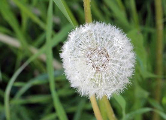 spring's flower di Photolo