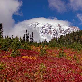 Mt Rainier by Eric Wellman - Landscapes Mountains & Hills ( mountain, peak, colors, snow, fall,  )