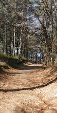 Photo: Forêt de hêtres