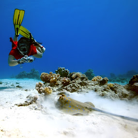Diving & Photography by Rico Besserdich - Sports & Fitness Watersports ( red sea, diver, underwater, diving, stingray, photographer, taking photos, pwc75 )