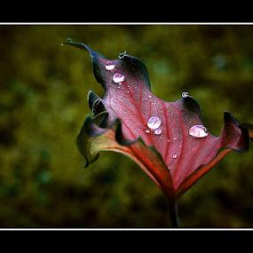 water drop by Kenny Sutan Sati - Nature Up Close Gardens & Produce