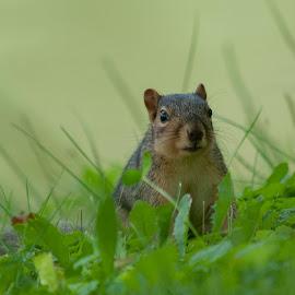 Keeping Low by Anita Frazer - Animals Other Mammals ( squirrel, mammal, animal )