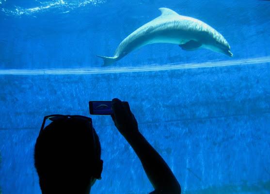 Delfino in posa! di Claudia Di Veglia