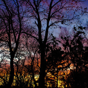 Silhouette by Kyle Blakeburn - Landscapes Sunsets & Sunrises ( nature, sunset, silhouette, trees, colors,  )