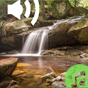 Forest Sounds Nature Relax icon