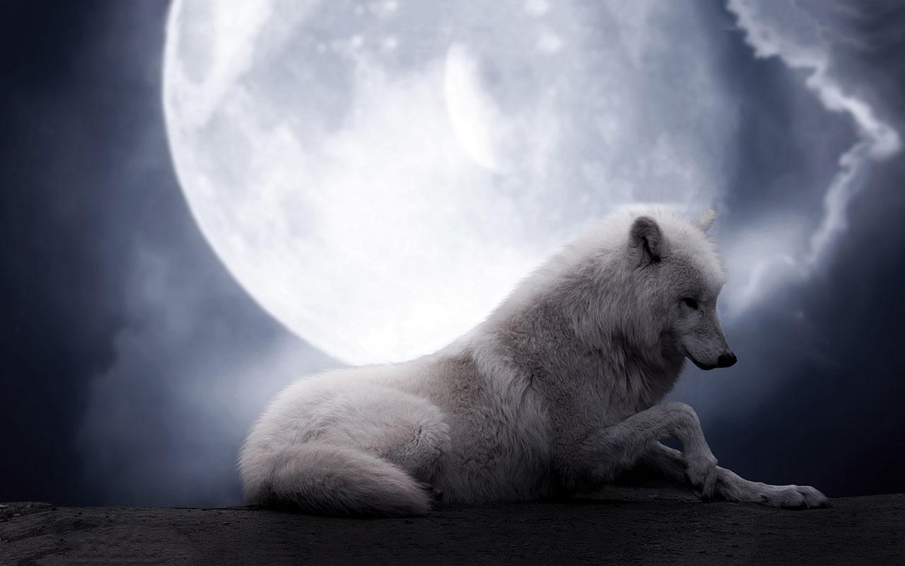 幻想的 狼のキレイな壁紙を高画質な画像でまとめました 写真