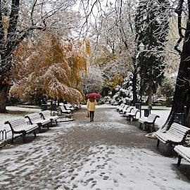 by Estislav Ploshtakov - City,  Street & Park  City Parks