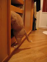 Photo: Soooo eine Unordnung! Das man hier alles immer selbst machen muss.....