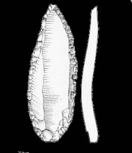Photo: A long thin flake that has been shaped and flaked into a fine fool - 30,000 years old