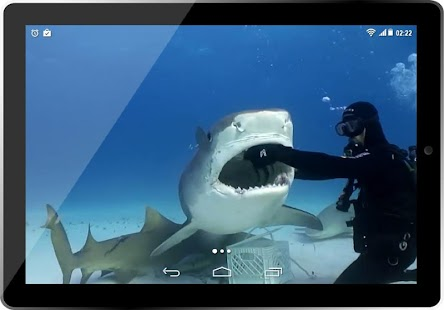 Real Tiger Shark 3D HD LWP for PC-Windows 7,8,10 and Mac apk screenshot 6