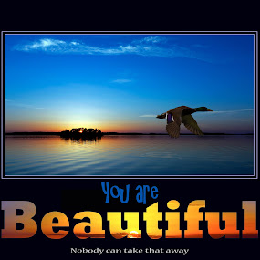 You Are Beautiful by Greg Johnson - Illustration Flowers & Nature ( water, mallard, beautiful, lake, beach, beauty, blue sky, inspiration, beautifull, sunset, poster, duck, sunrise, inspired, inspirational )