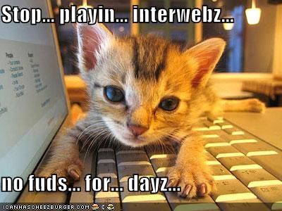 funny-pictures-kitten-laptop-hungry.jpg