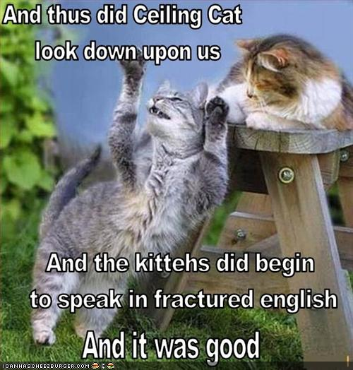 funny-pictures-preaching-about-lolcats.jpg