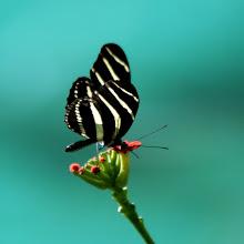 Photo: Kävimme Roatanin pienessä perhospuistossa