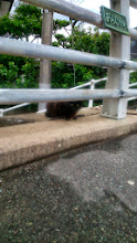 Photo: I chanced to feel someone's eyes on me on my way back home from a morning walk, then noticed this chubby little brown cat staring at me. In Fukuoka, May 2014. 27th May updated (日本語はこちら) -http://jp.asksiddhi.in/daily_detail.php?id=555