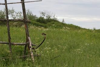 Photo: vanhaa maatalousperinnettä