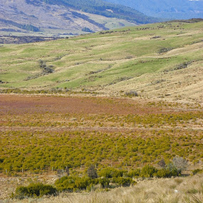 by Kim Pauly - Novices Only Landscapes ( #new zealand. # fields. #landscape. #grass.#meadows.#views.#nature. #love )