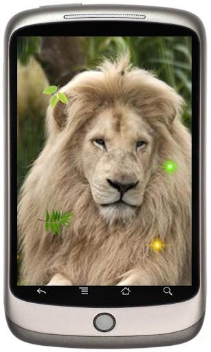 Cool Lion Predator 2015