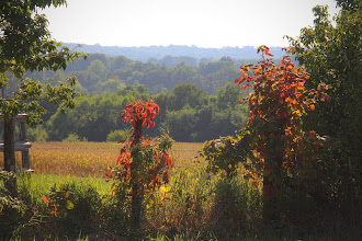 Photo: First signs of Fall Countryside Excelsior Springs, Mo.