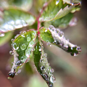 New Growth by Virginia Howerton - Nature Up Close Natural Waterdrops (  )