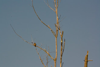 Photo: Closeup of that interesting tree with a dove on the limb.