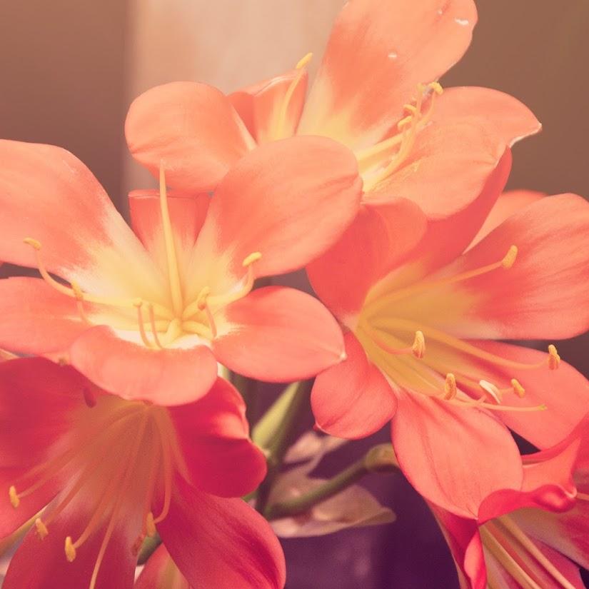Flores naturales para el Día de la Madre, el regalo ideal