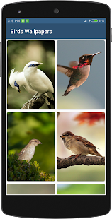 Birds Wallpapers HD - náhled