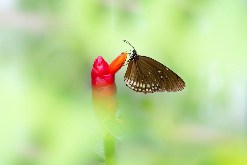 Madame butterfly di tonino_de_rubeis