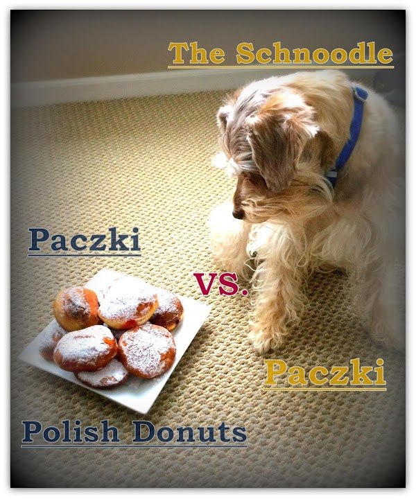 FOR FUN: Our male Schnoodle is named after the famous Paczki. It wasn't until...