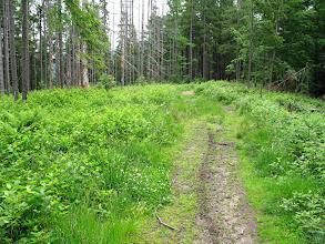 """Photo: 13.Dalej szlak jest już banalnie prosty: ot zwykły trekking raz lasem raz polaną, czyli - jak się ktoś kiedyś wyraził - """"dla krów i kobiet w ciąży""""."""