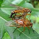 Marsh snipefly