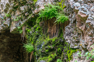 Photo: Moss on cliff at Lower Resumidero Falls; PEEC Waterfall Hike