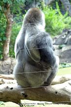 Photo: Ein schöner Rücken kann auch entzücken!