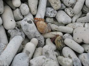 Photo: hermit crabs