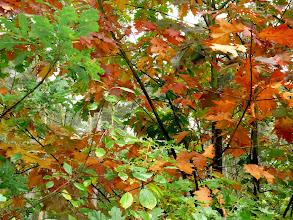 Photo: 'herfst-melange'....